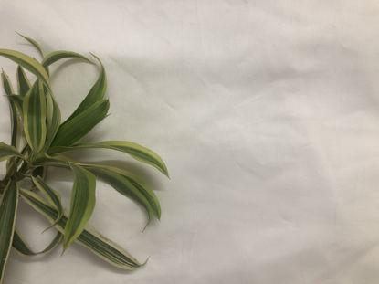 Picture of 100% Aloe Vera Fabric
